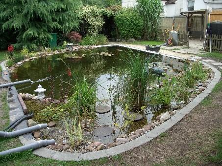 Teichbau for Welche fische im teich